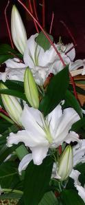 DSCN1055cw(Lillies)